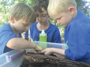 Roman Russell, Ethan Ingle and Austyn Zeis harvest critters from a rotted log during last year's Wildlife 101 camp at Camp Discovery in Blythewood. This year's camp begins March 28 and runs through April 1.