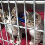 kittens-web